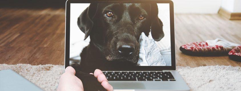 huisdieren in de gaten houden