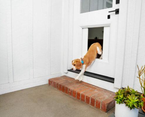 nieuw myQ Pet Portal, een slim hondenluik